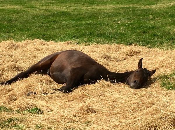 Twix sunbathing on the Haylage