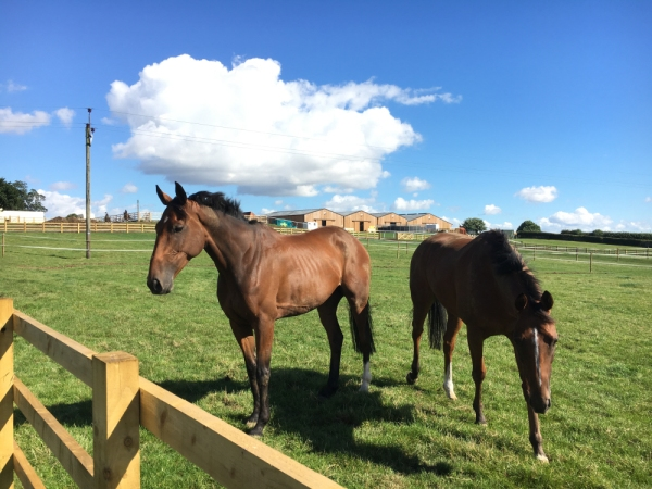 equifest and gallops 207