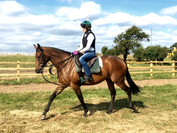 The 2 year old Aqlaam filly - 33% or 66% for sale - a lovely scopey 2 year old with a good pedigree.