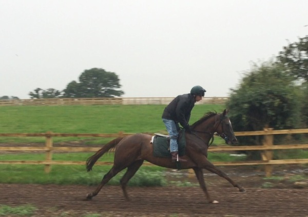 Peter with 3 year old filly Gabster - for sale