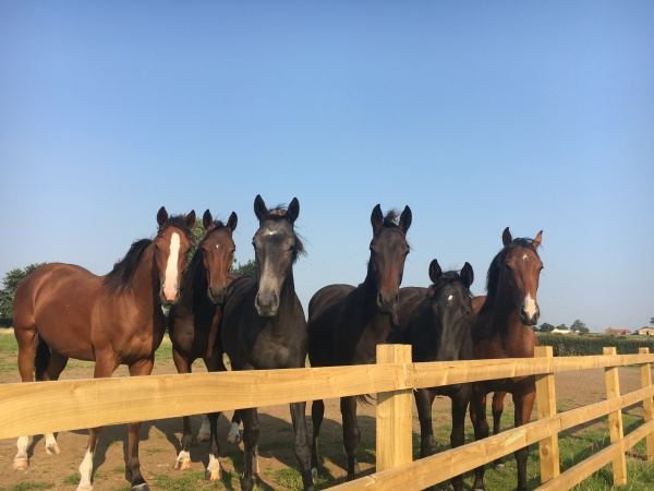 Hello from our yearling boys