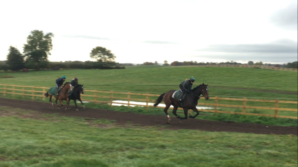 The huge Transient Bay (stenna) leads up the gallop with katie