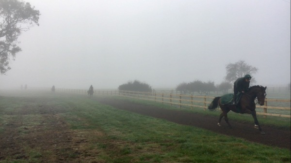 Courtown Oscar with Simon - out of the mist