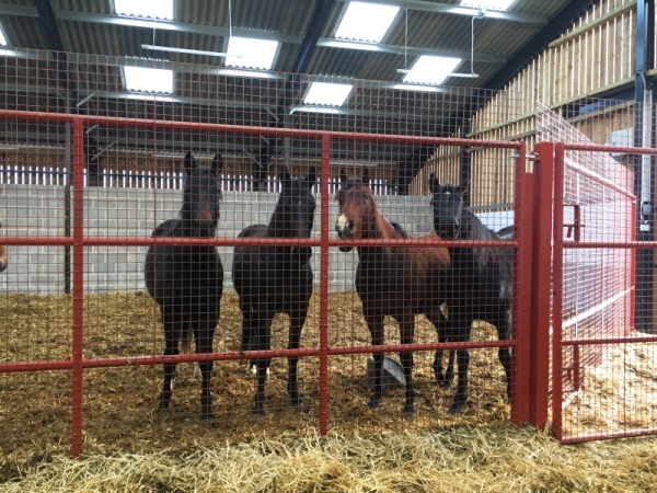 The 2 year old boys in the barn - all happy living together out of this cold weather!""