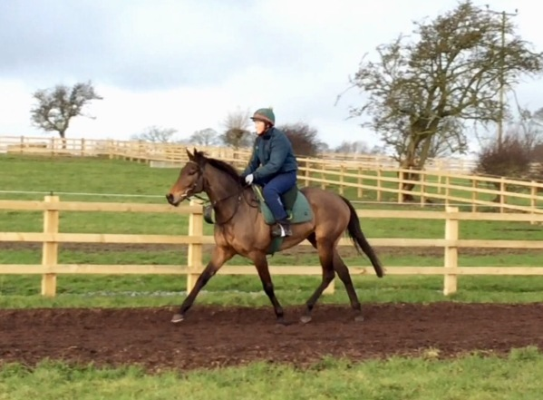 Another little Yeats horse - the diminuitive 'Hugh's Secrret with Julie - he heads to Wetherby