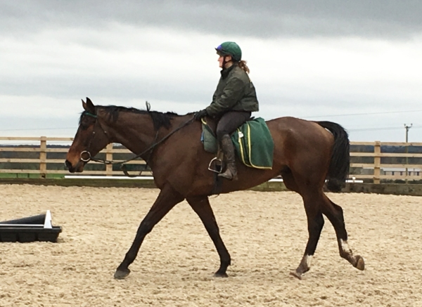 Transient Bay with Katie - looking fit and well after his latest win and we have at least ONE share now available to buy in him to join The Waking Ned Partnership. The Yearly renewal begins 1st March.