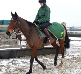 Nitical Nitwit & Nick - holds an entry for Kelso on Thursday
