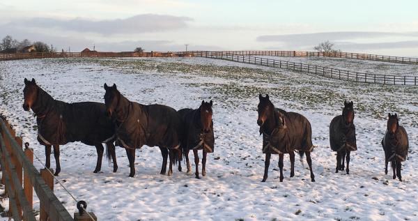 Snowyfieldhorses2