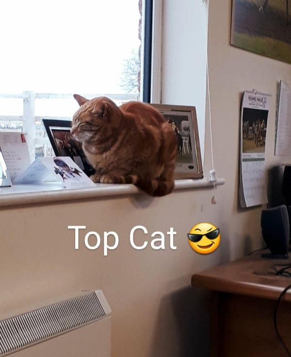 TopCatOffice