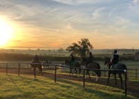 Down to the gallop...1st lot