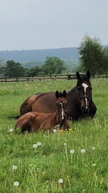 Skid & colt foal by Night of Thunder