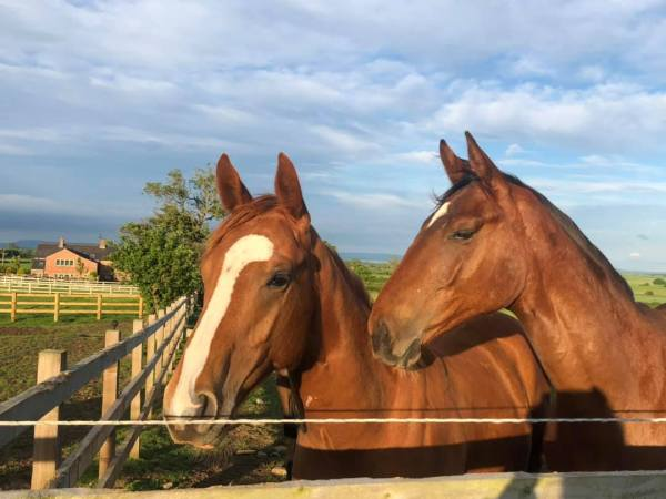 Charming Thought & Telescope yearlings