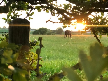 Looking through to the Mares field...