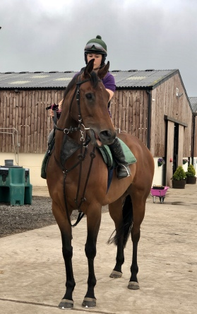 Dual purpose mare, Shine Baby Shine who will be heading to the flat for her first few runs